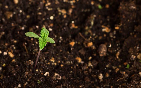 5 Best Cannabis Soil Nutrients in 2021